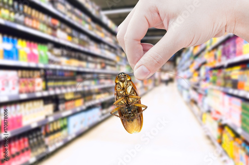 Hand holding cockroach in the supermarket,eliminate cockroach in shopping mall