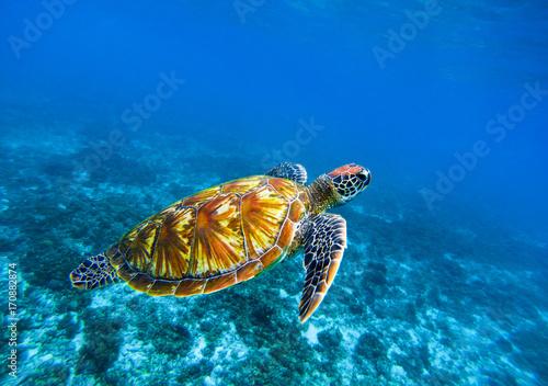 Valokuva  Sea turtle in deep blue seawater