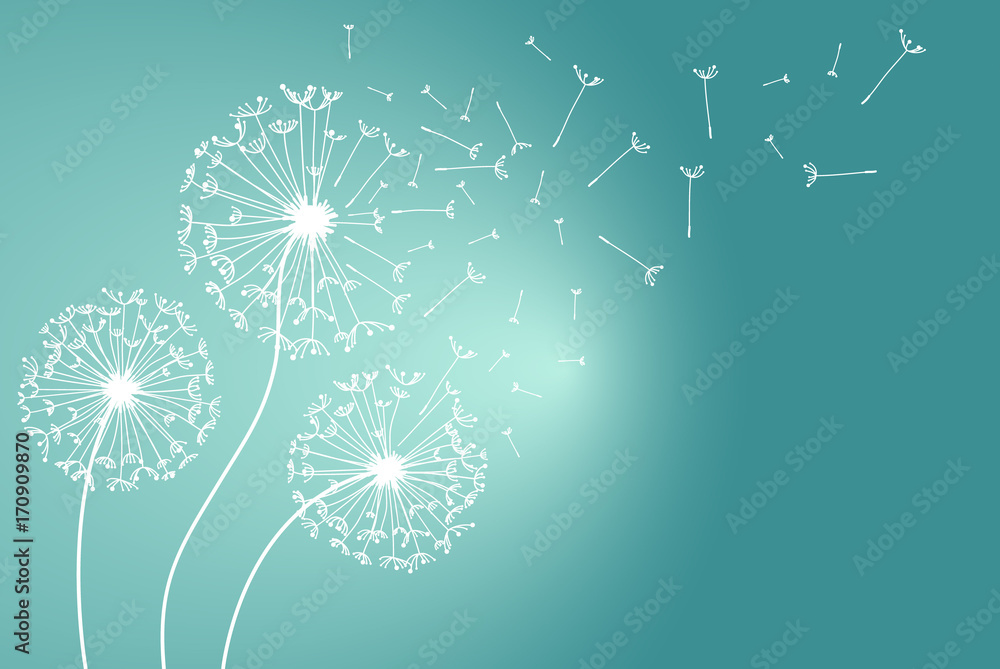 Fototapety, obrazy: Dandelions flower. Vector abstract dandelions for background design. Vector Illustration of Dandelion fof greeting card. Flying Dandelion black. Abstract dandelion background