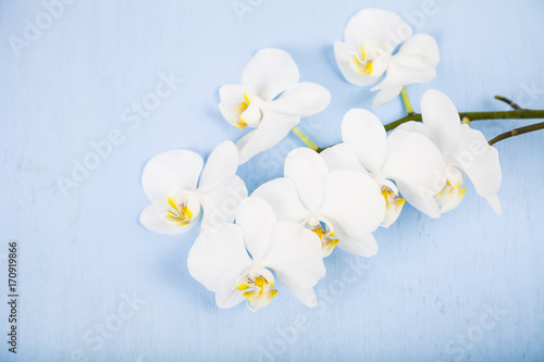 Fototapety, obrazy: Orchid (Phalaenopsis) on a blue wooden table