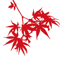 Maple (autumn Leaves) Silhouette