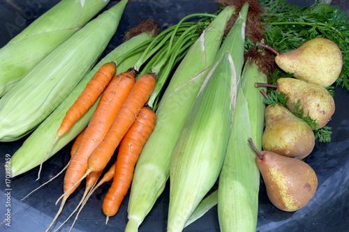 Photo vegeta
