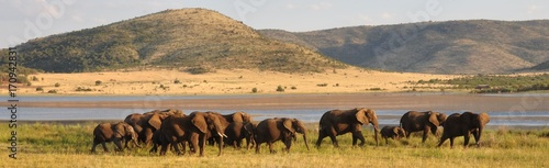 Tuinposter Afrika Elephant herd in beautiful surroundings