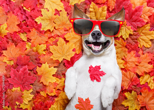 Wall Murals Crazy dog autmn fall leaves dog