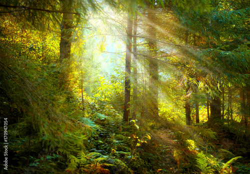 Autumn scene. Misty old forest with sun rays, shadows and fog