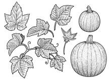 Pumpkin And Leaf Illustration,...