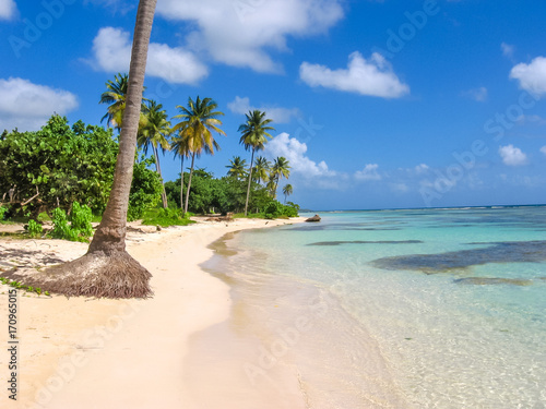 Coconut palms, turquoise sea and white sandy beach of Sainte-Anne Guadeloupe, Antilles, Caribbean.