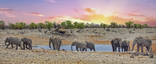 Large Herd Of Elephants At A W...