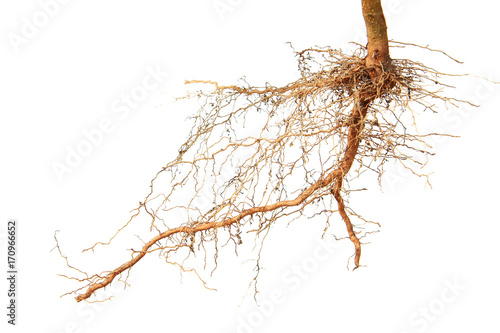 Photo  Close up of roots tree