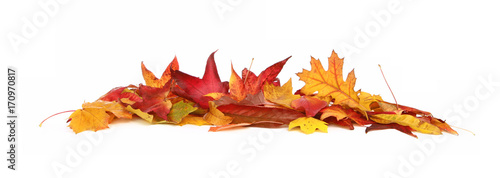 Photo Feuilles mortes en automne