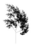 Flat Vector Computer Generated  L-system Fractal Plant - Generative Art - 170986216