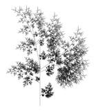 Flat Vector Computer Generated  L-system Fractal Plant - Generative Art   - 170986446