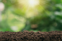 Soil For Planting With Green B...