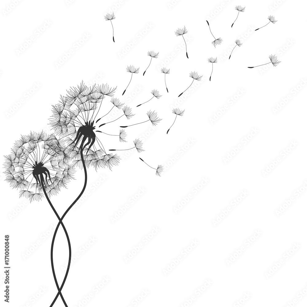 Fototapety, obrazy: Dandelions flower. Vector abstract dandelions for background design. Vector Illustration of Dandelion for greeting card. Flying Dandelion black. Abstract dandelion background
