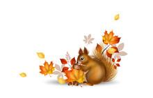 Autumn Squirrel Illustration