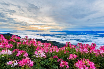 FototapetaBeautiful flower and fog on the view of mountains, winter landscape with foggy
