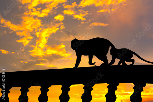 Foto auf AluDibond Ziehen Silhouette image. Two monkeys (Mom and son) walking on concrete fence.