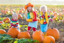 Kids Picking Pumpkins On Hallo...