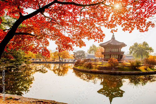 Photo sur Aluminium Seoul Autumn in Gyeongbokgung Palace, Seoul in South Korea.