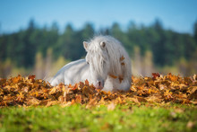 Little Pony Lying In Leaves In Autumn