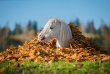 Adorable Little Pony Lying In A Pile Of  Leaves In Autumn