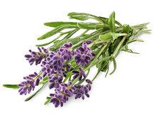 Fresh Lavender Sprig With Violet Flowers Isolated On A White Background. Design Element For Product Label, Catalog Print, Web Use.