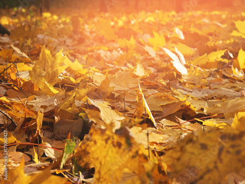 Papiers peints Jardin Red and Orange Autumn Leaves Background