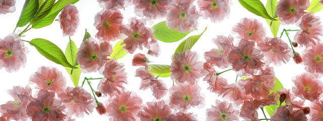 Panel Szklany Do kuchni sakura flowers