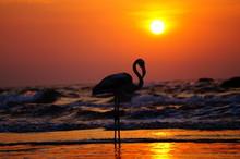 White Flamingo On The Sunset O...