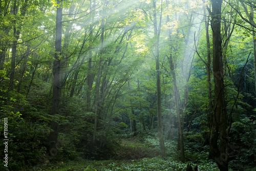 Foto auf AluDibond Olivgrun 森の道