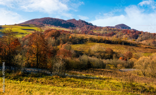 Poster Miel late autumn countryside landscape. forest with red foliage on a beautiful sunny day in mountainous rural area