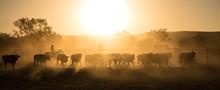 Mustering, Kimberley, Western ...