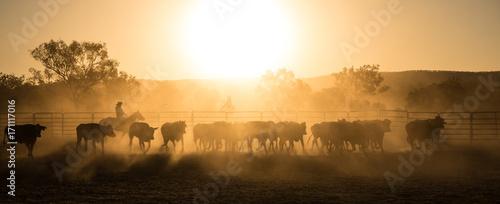 mustering, Kimberley, Western Australia Billede på lærred