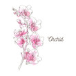 Pink orchid illustration on white background