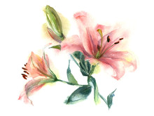 Watercolor Painting Of Flowers...