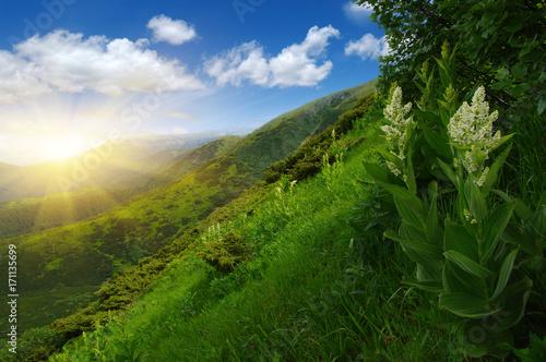 biale-kwiaty-posrod-zieleni-i-wczesny-poranek-w-gorach