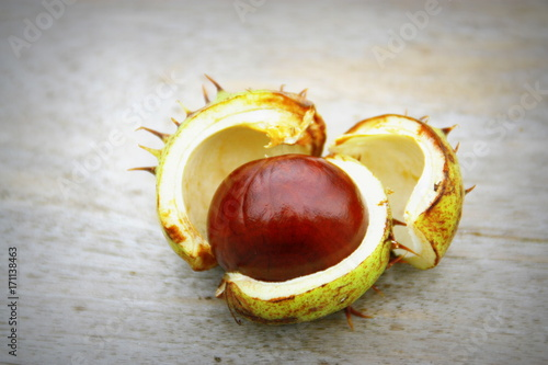 Photo marron d'inde dans sa bogue,Aesculus hippocastanum