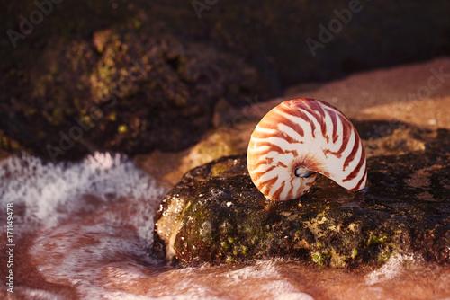 Fotografie, Obraz  seashell nautilus on sea beach with waves under sunrise sun light