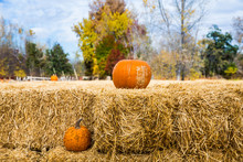 Two Pumpkins With Hay Bales