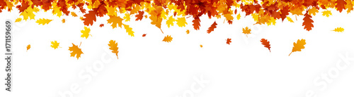 Autumn banner with orange leaves. Canvas Print