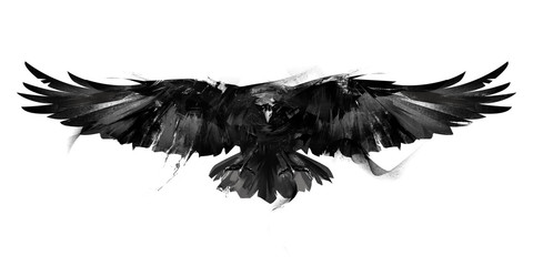 Fototapeta isolated black and white illustration of a flying bird crow front