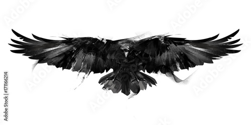Canvas Print isolated black and white illustration of a flying bird crow front