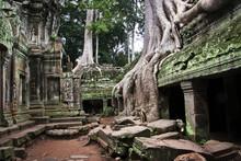 Cambodia, Siemreab, Angkor