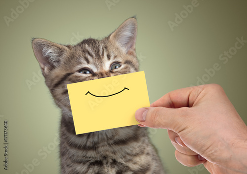 Keuken foto achterwand Kat funny happy young cat portrait with smile on cardboard
