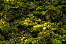 Stony Forest Floor With Moss