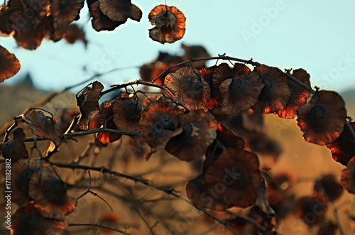 Foto op Aluminium Draken Fleurs d'automne