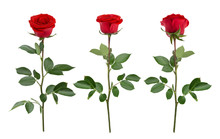 Set With Red Roses. As Design ...
