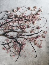 Tree Branches And Pink Flowers