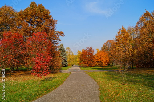 Foto op Canvas Herfst Beautiful autumn landscape - great autumn trees - autumn alley