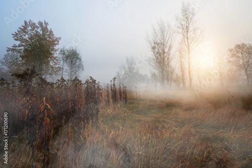 Zdjęcie XXL Mglisty i jesienny poranek w lesie